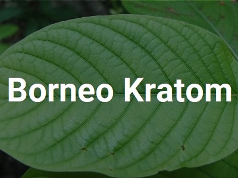 The Usable and the Beneficial Traits of Borneo Kratom