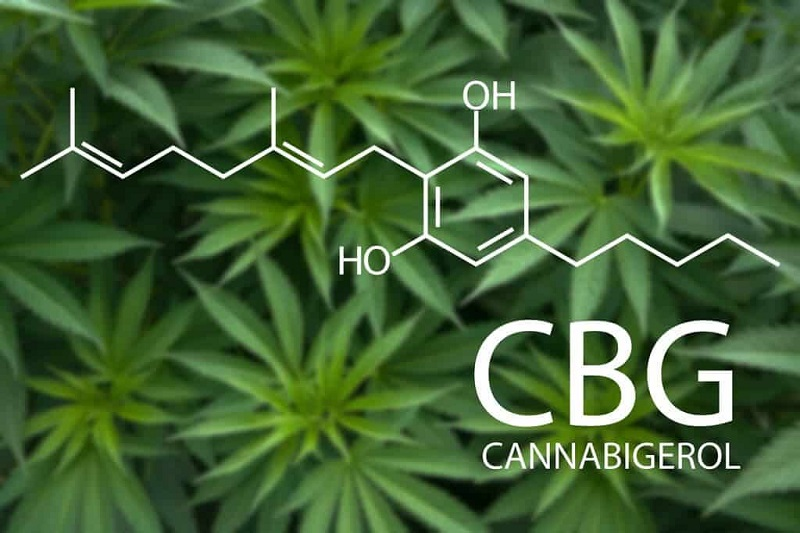 How are CBD Cigarettes Made? What Do They Contain?